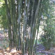 PHOTO OF TEXTILIS: WEAVERS BAMBOO